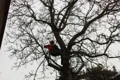 Baumpflege.1
