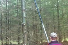 Wertholzastung.2