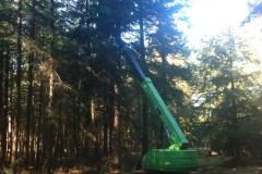Wertholzastung.3