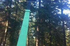 Wertholzastung.4