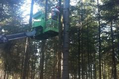 Wertholzastung.5